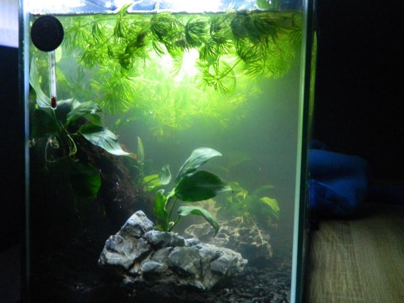 Bac 20 litres spécifique killies pour mon fils  Aquari11