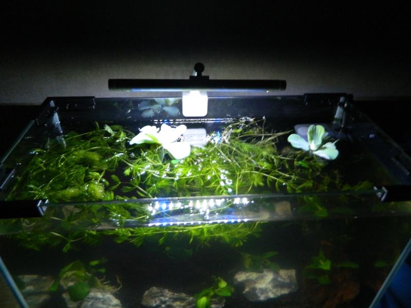 Bac 20 litres spécifique killies pour mon fils  Aquari12