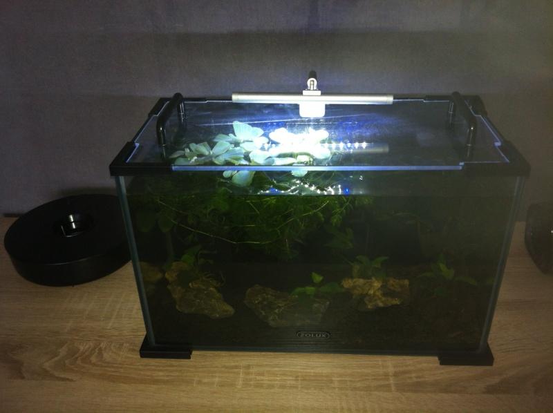 Bac 20 litres spécifique killies pour mon fils  Aquari14
