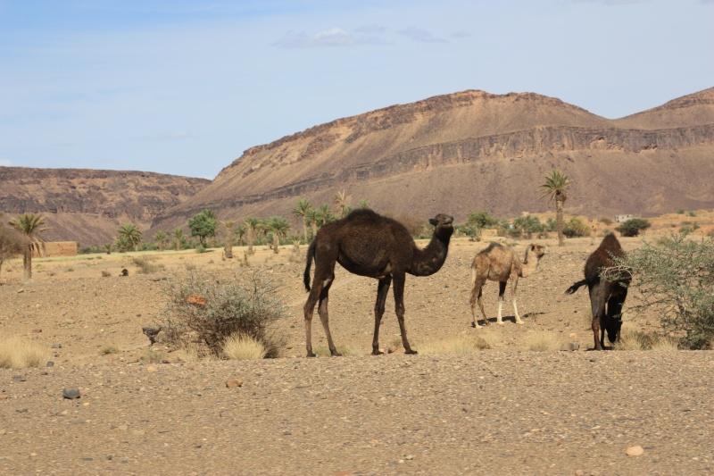 photos maroc 30-04_10
