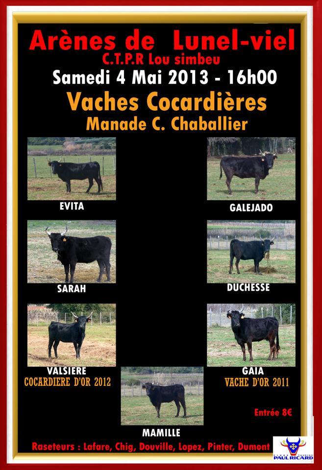 Vaches cocardières Manade C.Chaballier 57979610