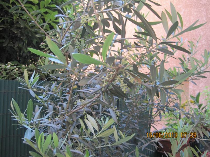 Photos de nos jardins - Page 3 Le_vie10