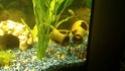 Mon aquarium 200L 40067910