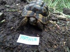 Identification des mes 3 hermann adultes Arthur10
