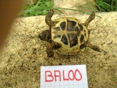 Voici le reste de la famille pour identification Baloo_11