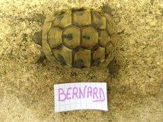 Voici le reste de la famille pour identification Bernar10