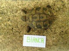 Voici le reste de la famille pour identification Bianca10
