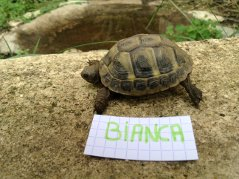 Voici le reste de la famille pour identification Bianca11