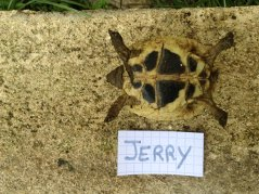 Voici le reste de la famille pour identification Jerry_10