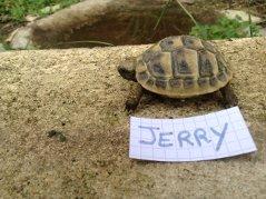 Voici le reste de la famille pour identification Jerry_11