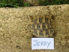 Voici le reste de la famille pour identification Jerry_12