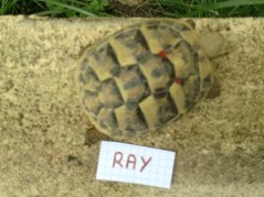 Voici le reste de la famille pour identification Ray_110