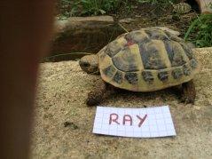 Voici le reste de la famille pour identification Ray_210