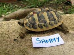 Voici le reste de la famille pour identification Sammy_10
