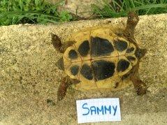 Voici le reste de la famille pour identification Sammy_11