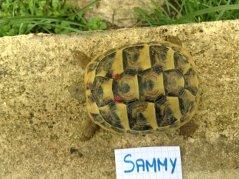 Voici le reste de la famille pour identification Sammy_12