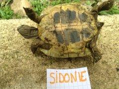 Voici le reste de la famille pour identification Sidoni10