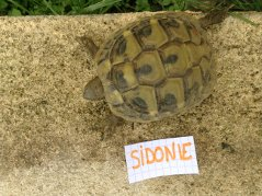 Voici le reste de la famille pour identification Sidoni11