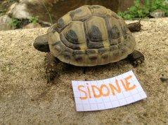 Voici le reste de la famille pour identification Sidoni12