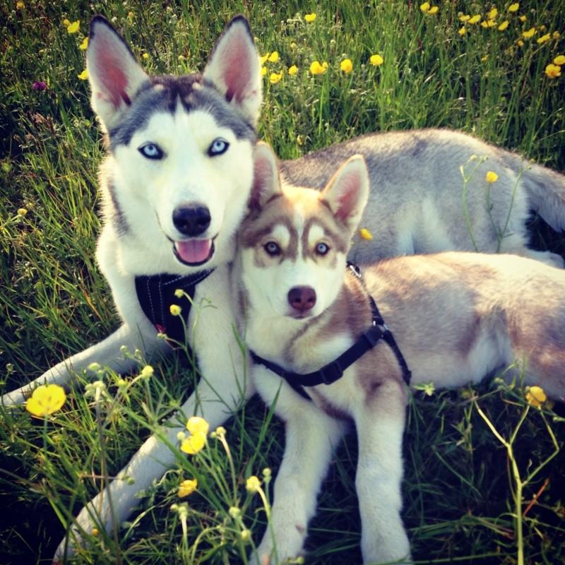 FREYA & SASKI Newiph19