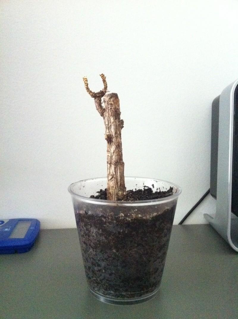 Plantes inconnu Img_2010