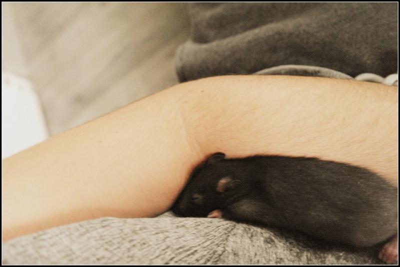 Tifa, et son nouveau chez soi ;-)  6974_111