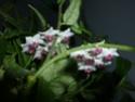 Blüten 2013 - Seite 6 02711