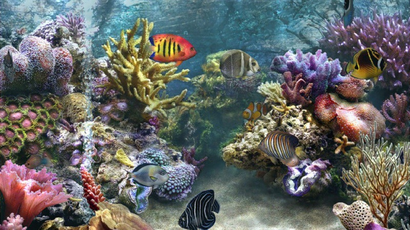 Our Amazing World - Page 2 Coral_10