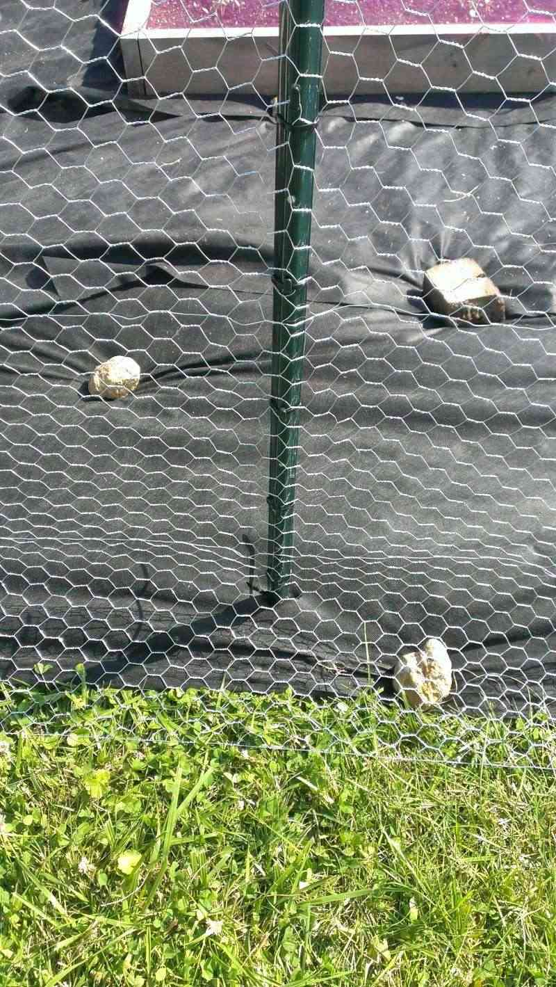 Need Help, Chicken Wire Fence on Green U-Posts