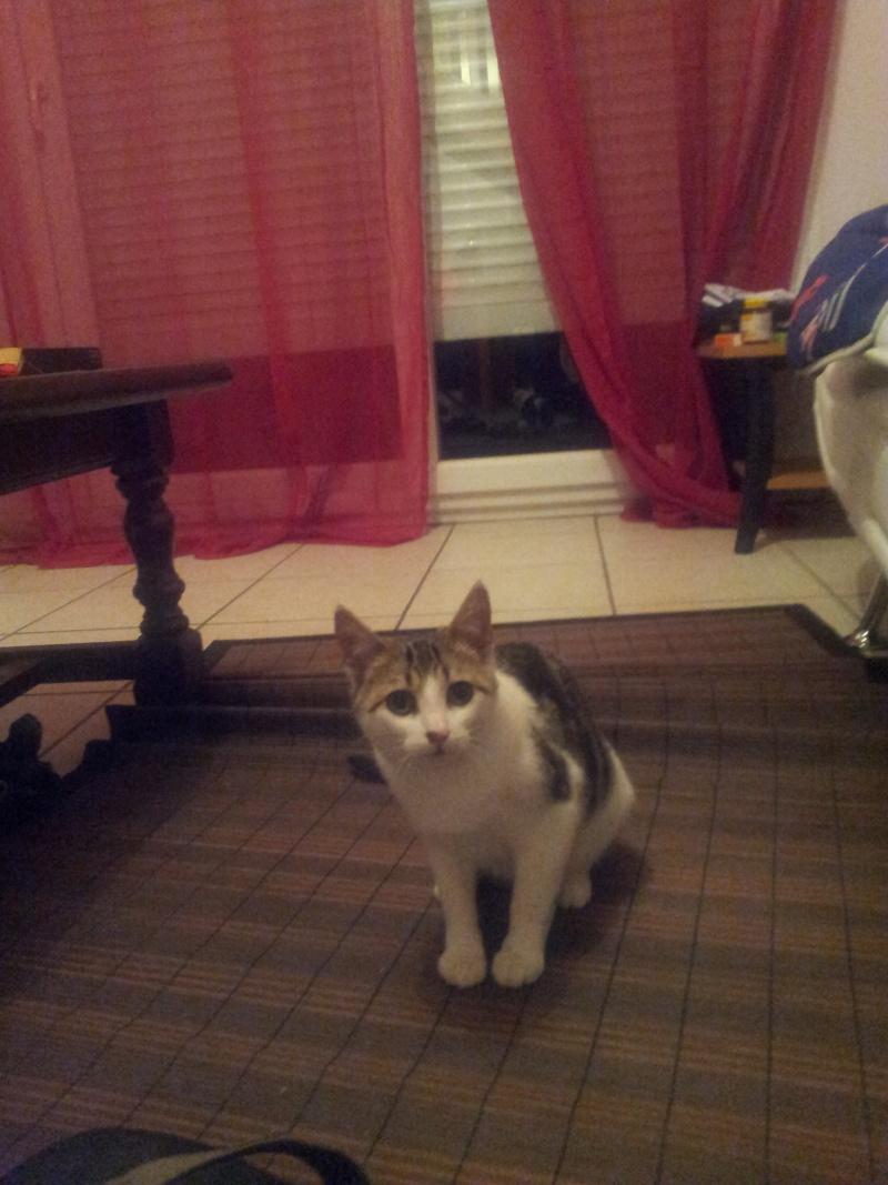 Adoption d'un chaton sauvage de 5 mois 20130610