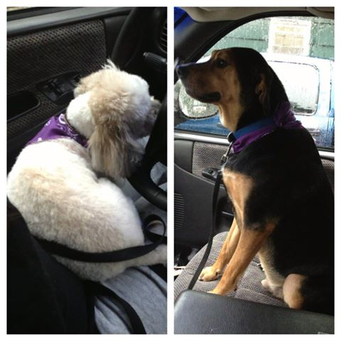 my 2 Dogs <3 94293410