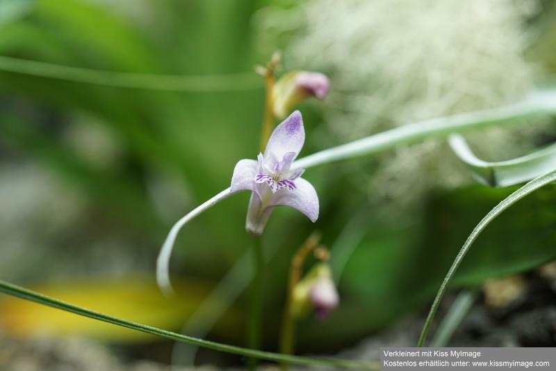 Orchideen 3 (fortlaufende Seiten 300 bis 400) - Seite 64 Dsc05649