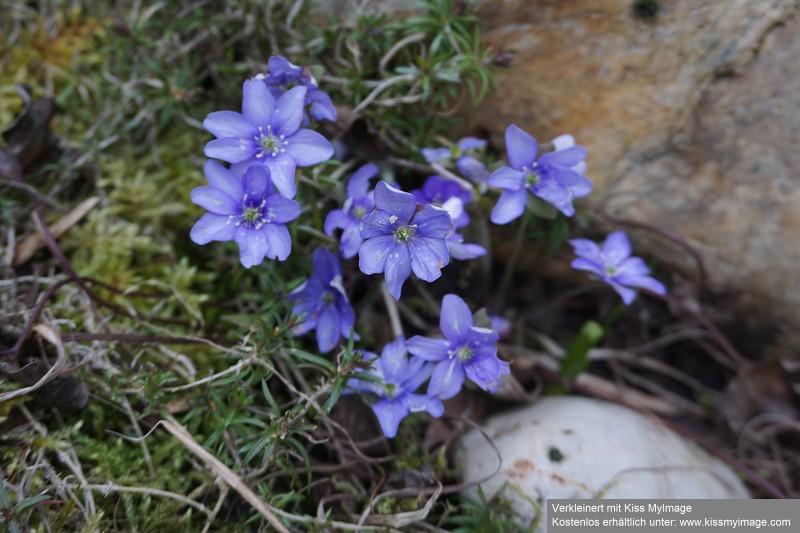 Erste Frühlingsboten im Garten und in Wald und Flur - Seite 88 Dsc05671