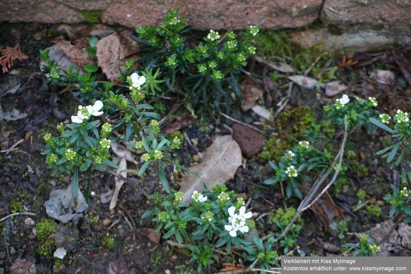 Erste Frühlingsboten im Garten und in Wald und Flur - Seite 88 Dsc05714