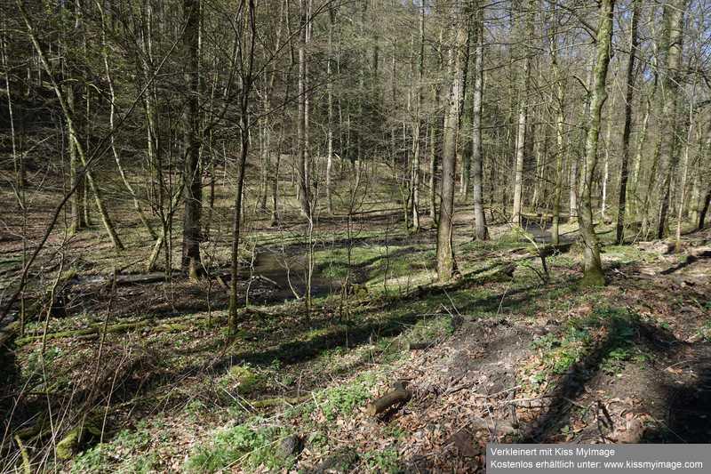 Erste Frühlingsboten im Garten und in Wald und Flur - Seite 91 Dsc05730
