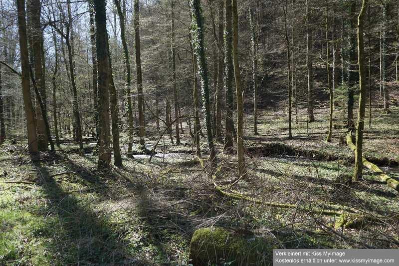 Erste Frühlingsboten im Garten und in Wald und Flur - Seite 91 Dsc05731