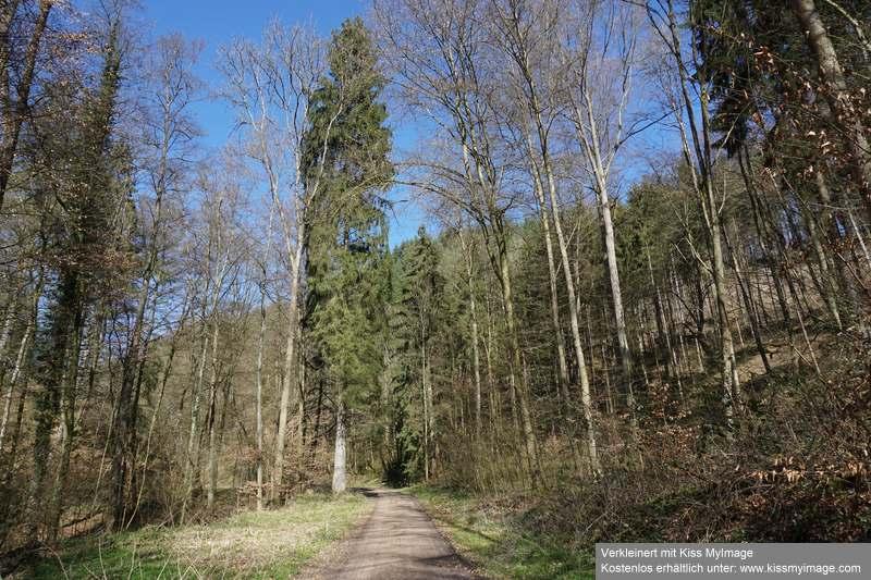 Erste Frühlingsboten im Garten und in Wald und Flur - Seite 91 Dsc05732