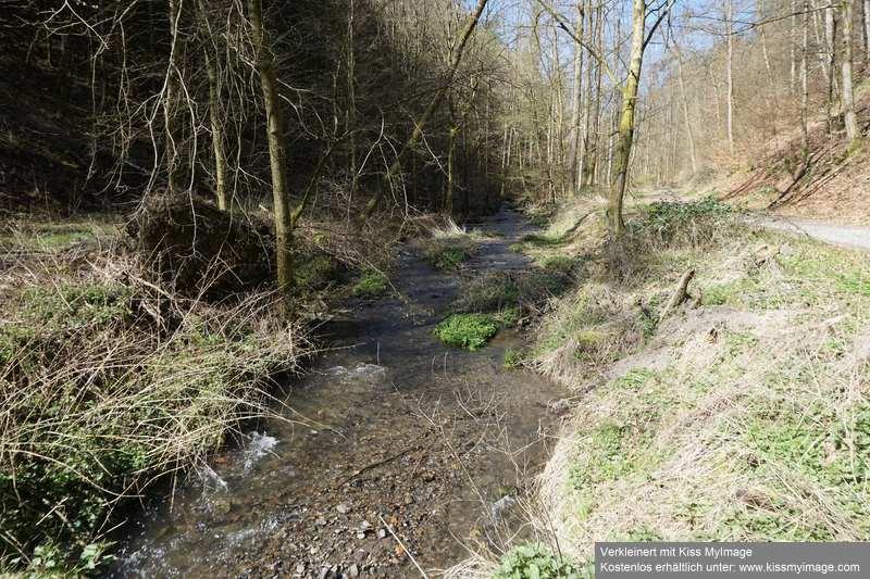 Erste Frühlingsboten im Garten und in Wald und Flur - Seite 91 Dsc05741
