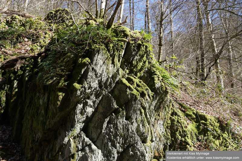 Erste Frühlingsboten im Garten und in Wald und Flur - Seite 91 Dsc05743