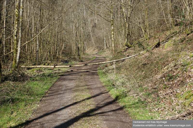 Erste Frühlingsboten im Garten und in Wald und Flur - Seite 91 Dsc05744