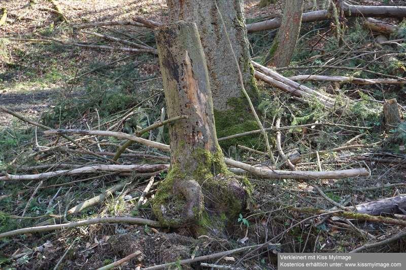 Erste Frühlingsboten im Garten und in Wald und Flur - Seite 91 Dsc05749