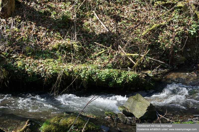 Erste Frühlingsboten im Garten und in Wald und Flur - Seite 91 Dsc05754