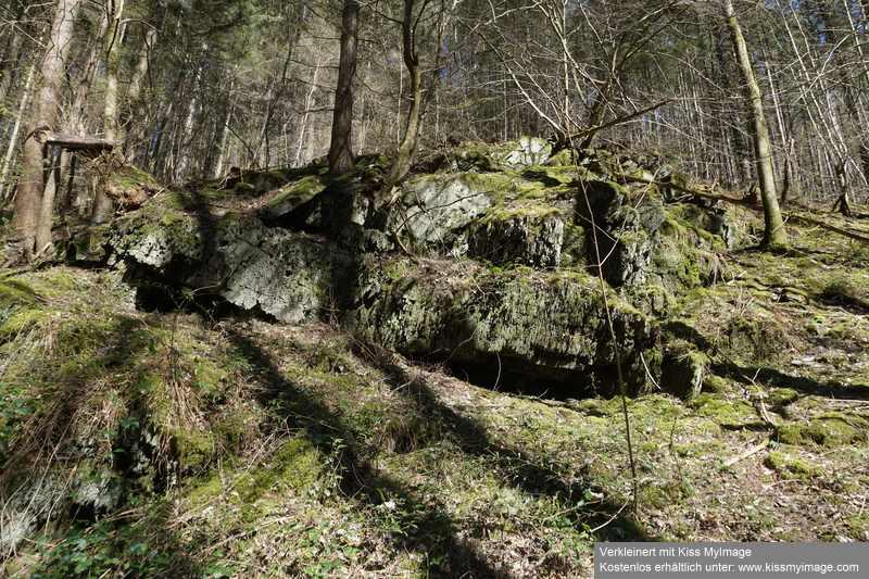 Erste Frühlingsboten im Garten und in Wald und Flur - Seite 91 Dsc05756