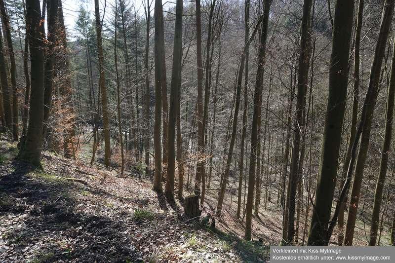 Erste Frühlingsboten im Garten und in Wald und Flur - Seite 91 Dsc05758