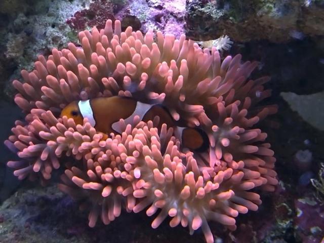 [PHOTO] Aquarium Récifale  - Page 3 72580310