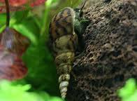 Vos escargots Defaul10