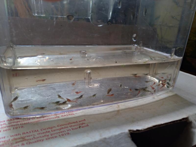 Promo de l'avant pâque exclusif au forum aquariophilie facile Dzocla17