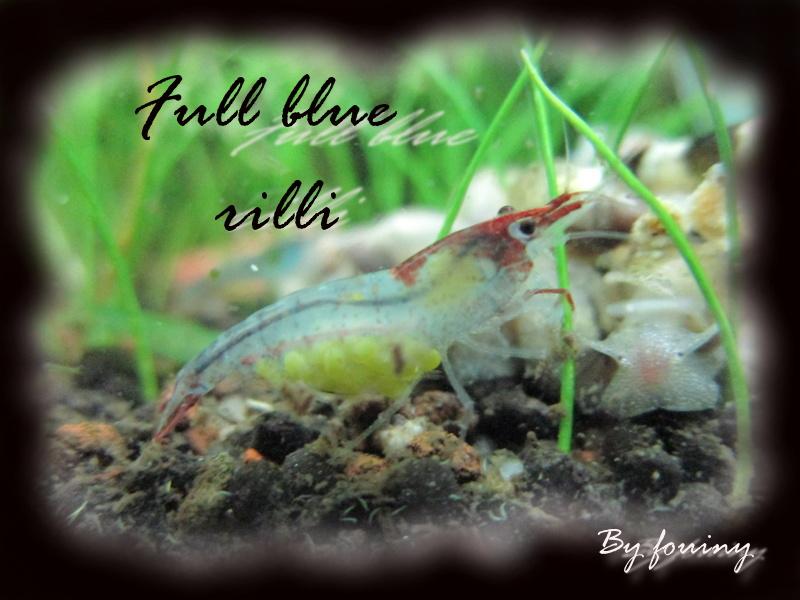 Recueil de photo aquariophiles de qualités Full_b10