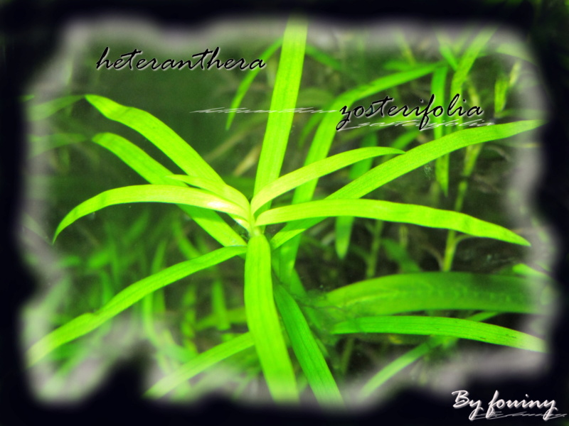 fouiny inventaire photo de mes plantes. Hetera10