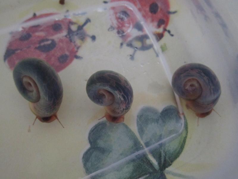 Vos escargots Img_3811